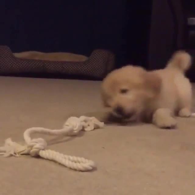 Enlace a Cuerda, el peor enemigo de un perro