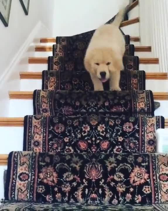 Enlace a Una forma totalmente válida de bajar escaleras
