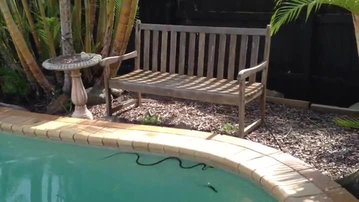 Enlace a Seguro que se te han quitado las ganas de construir un piscina en el jardín de casa
