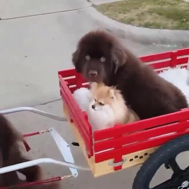 Enlace a Perro llevando a sus hijos de paseo. Entrañable