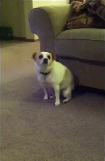Enlace a Dicen que los perros imitan todo lo que hacen sus dueños