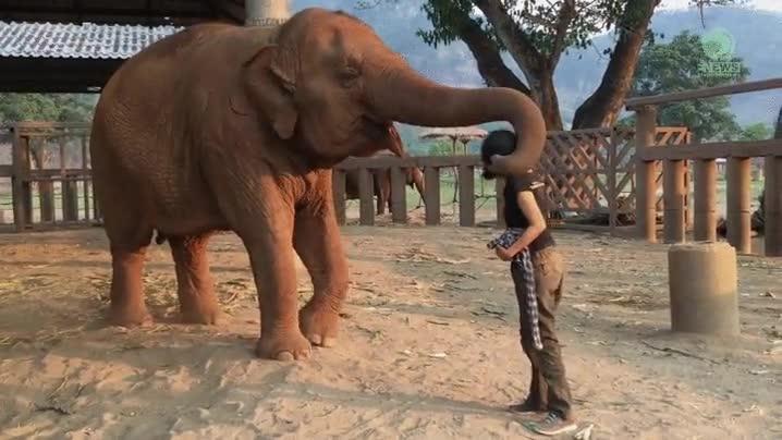 Enlace a Elefantes que saben acabar una discusión de la mejor de las maneras