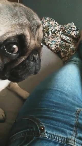 Enlace a Cuando tu perro te hace la mirada más tensa de la historia