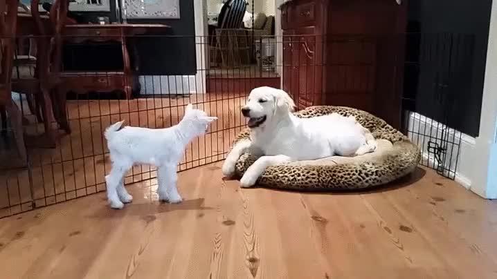 Enlace a La genial reacción de un perro cuando conoce a su nuevo compañero de juegos