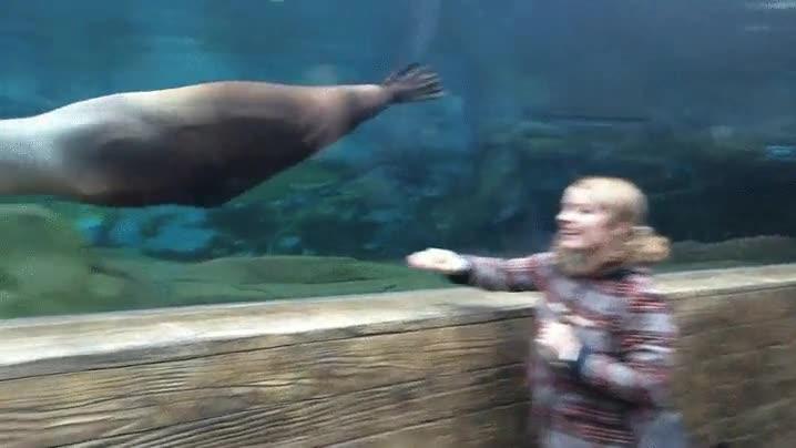 Enlace a León marino jugando a atrapar cosas