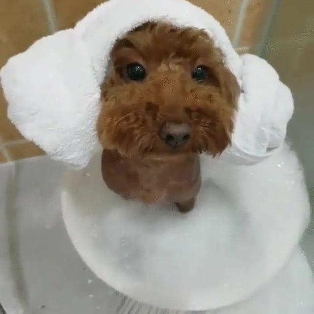 Enlace a Perros que lo dicen  todo con la mirada cuando llega la hora de la ducha