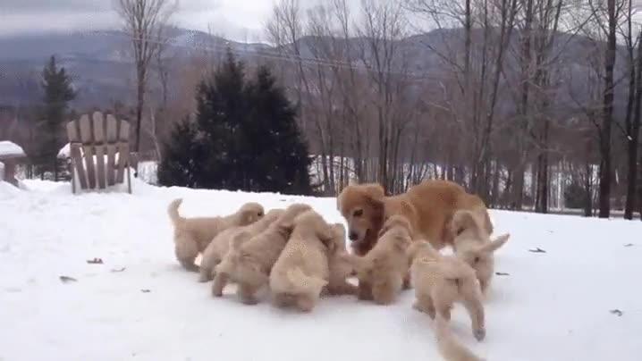 Enlace a Mamá jugando con sus cachorros. Parece una escena de The Walking Dead