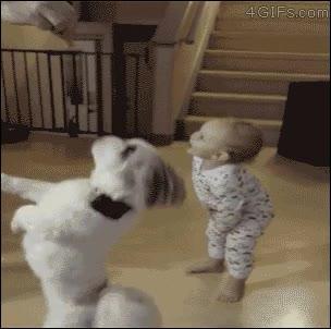 Enlace a Perro enseñando un truco a un humano
