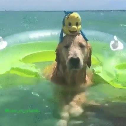 Enlace a Perro pasando el mejor día de su vida. Se le nota en la cara