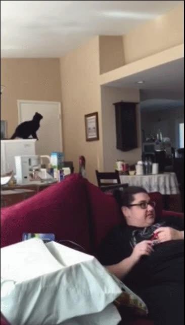 Enlace a Gato realizando un salto de fe. El final te lo puedes imaginar