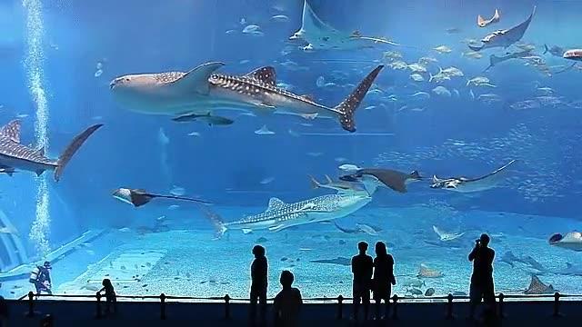 Enlace a Kuroshio, el segundo acuario más grande del mundo