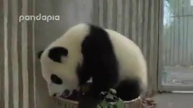Enlace a Cuidar de un panda es como cuidar de tu amigo borracho