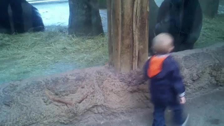Enlace a Haciendo amigos en el zoo
