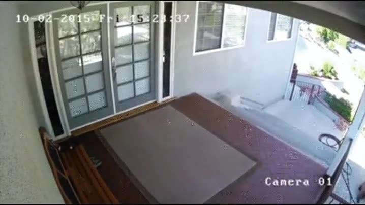 Enlace a Nada como un perro pequeño para proteger tu casa