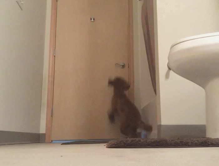 Enlace a Por fin he descubierto cómo mi perro de 7 meses se escapa del baño