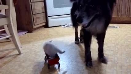Enlace a Perros maleducados y poco considerados