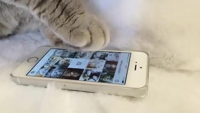 Enlace a Gatos muy enganchados a las redes sociales