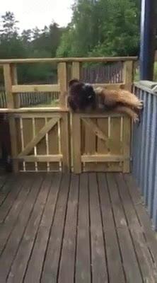 Enlace a Perros que han aprendido a escaparse viendo tutoriales de Houdini