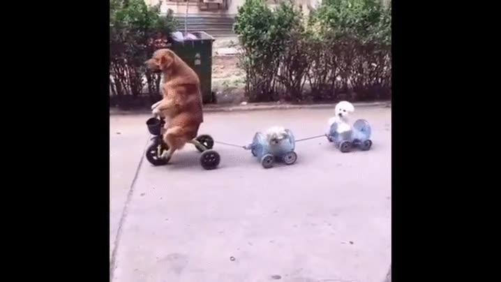 Enlace a Perros entrenando para las olimpiadas