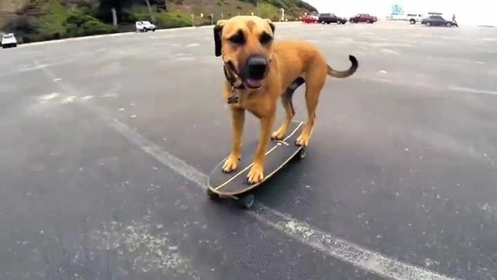 Enlace a Perro patinando mejor que muchos de nosotros