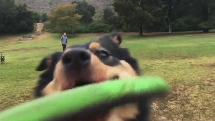 Enlace a Cuando tu perro atrapa el fresbee de forma accidentada