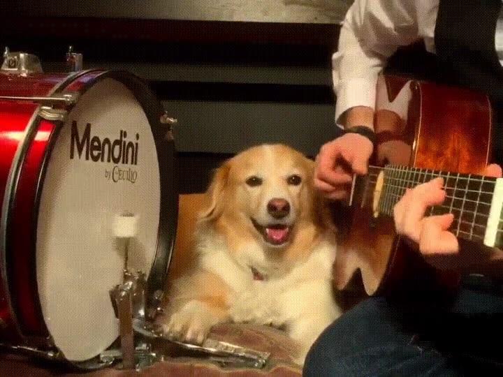 Enlace a He decidido montar una banda de rock con mi perro