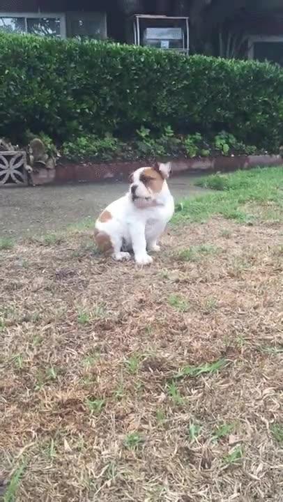 Enlace a Reacción de un cachorro cuando siente la lluvia por primera vez