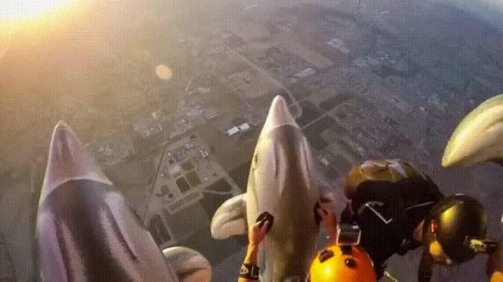 Enlace a Paracaidismo con delfines