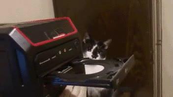 Enlace a Gato alucinando con una grabadora de DvD's
