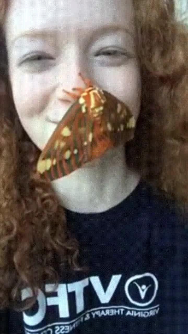 Enlace a Dejarías que una polilla tan grande se posara en tu nariz?