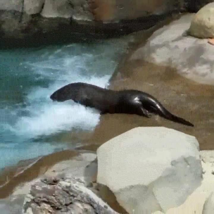 Enlace a Las focas también tienen derecho a disfrutar de los parques acuáticos