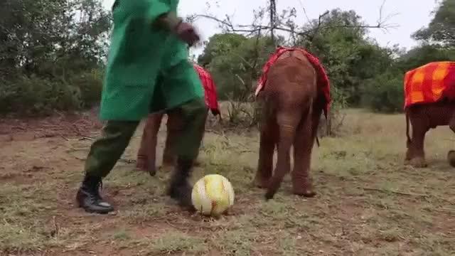 Enlace a Elefantes que han visto muchos partidos de la Eurocopa y han organizado su propio torneo