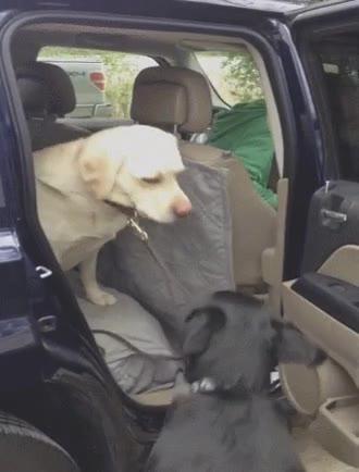 Enlace a Perro ayudando a su miedoso amigo a bajar del coche