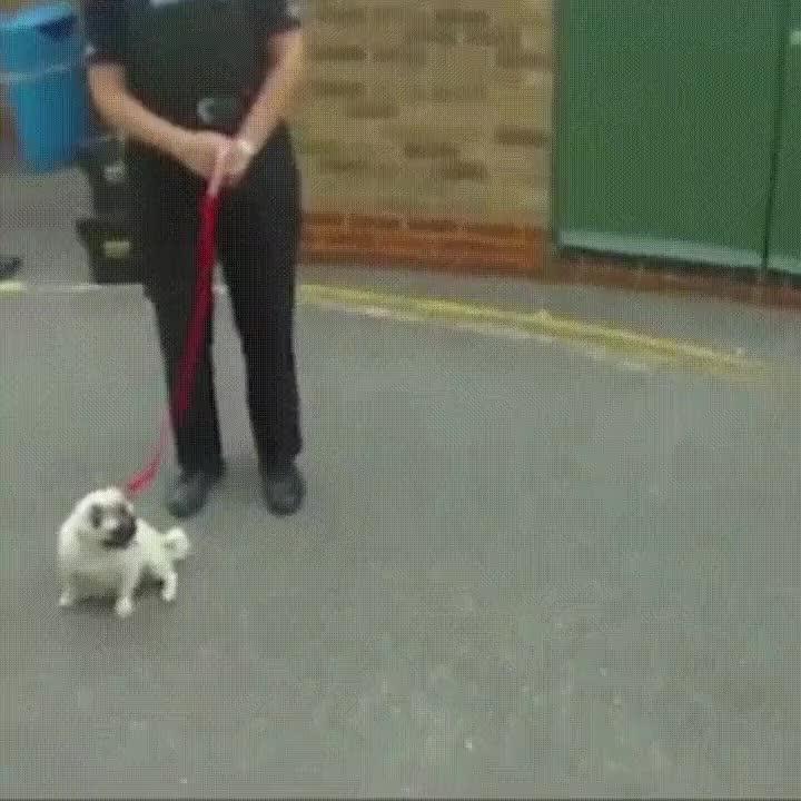 Enlace a Reacción de un perro cuando lo devuelven con su dueña después de ser raptado
