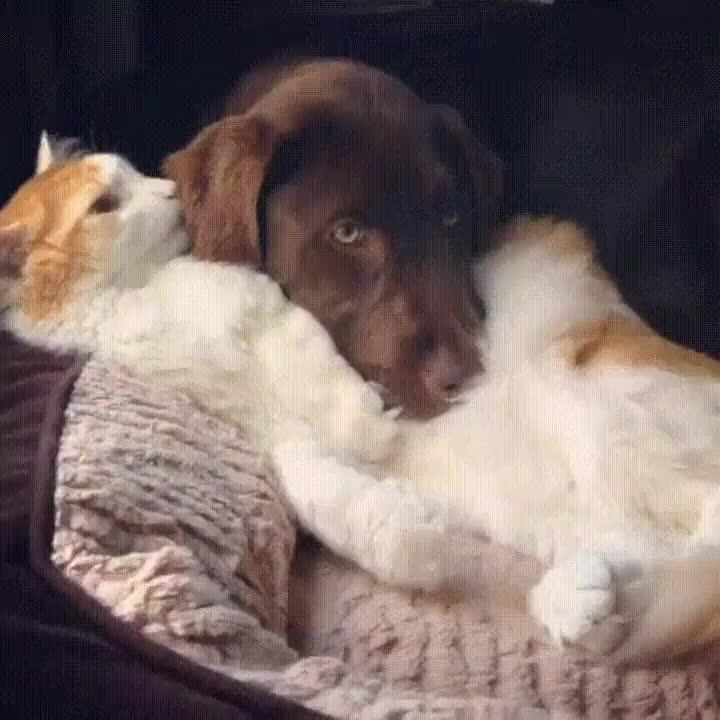 Enlace a Para este gato ha llegado la hora del baño