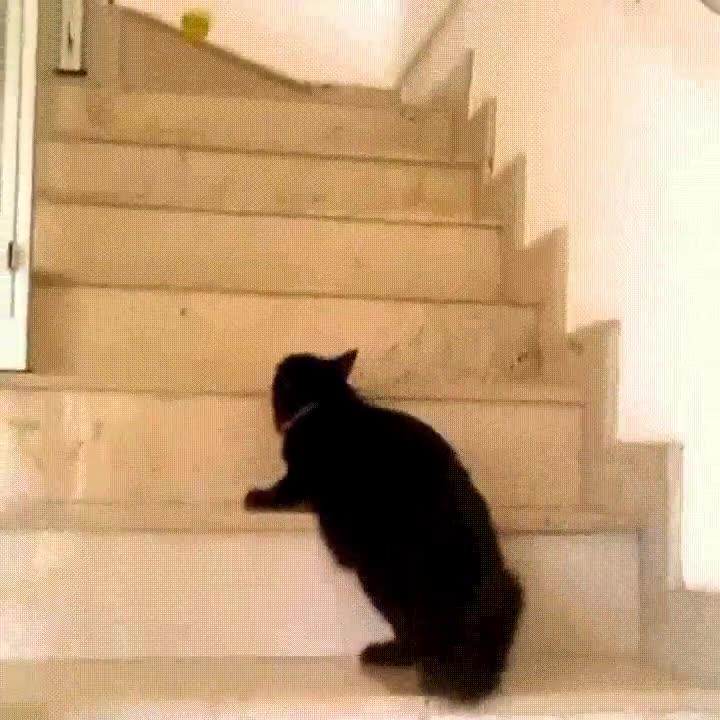 Enlace a Gato con pocas ganas de bajar por las escaleras