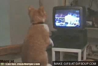 Enlace a Gatos que han visto demasiados combates de boxeo