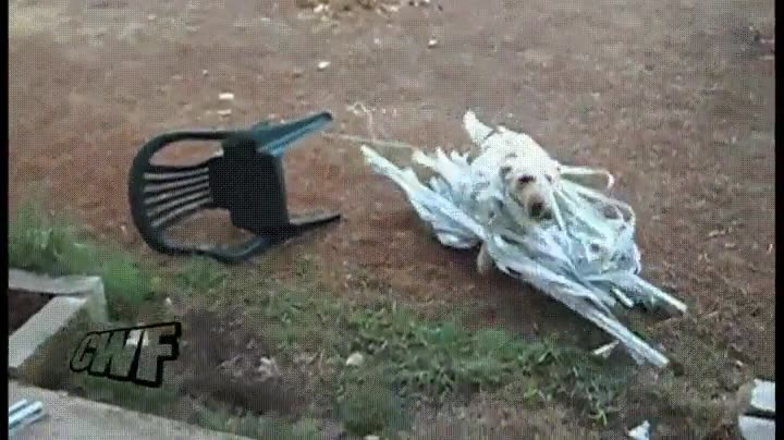 Enlace a Cuando tu perro la lía con las cortinas de casa