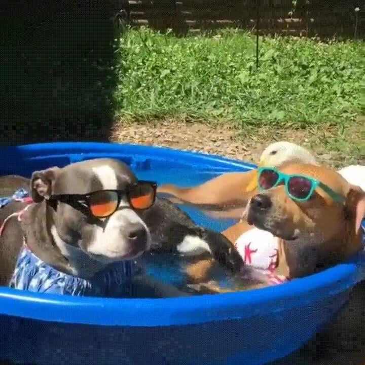Enlace a Preparados para el verano