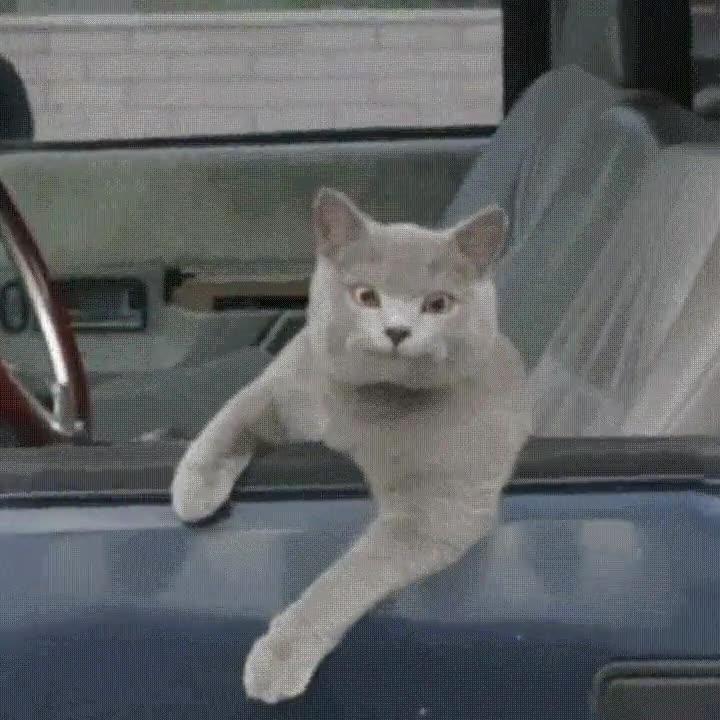 Enlace a Trolleando a un gato conductor. Espera, ¿qué acabo de ver?