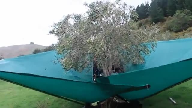 Enlace a Recolectar olivas es más interesante de lo que pensaba
