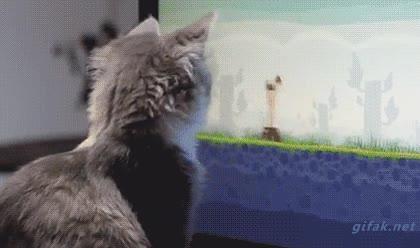 Enlace a Gato jugando a Angry Birds