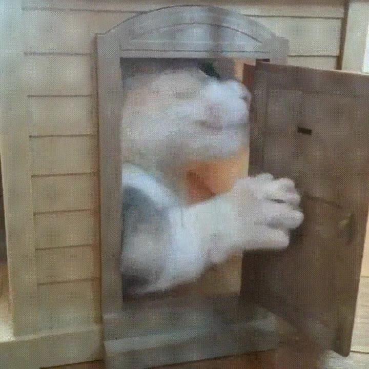 Enlace a Gatos que no soportan que se quede la puerta de casa abierta