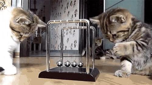 Enlace a Gatos aprendiendo las leyes de la física