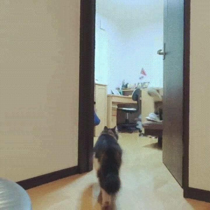 Enlace a Lo que hacen tus gatos cuando no están en casa