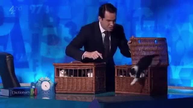 Enlace a Dicen que a día de hoy todavía está recogiendo gatos