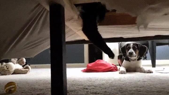Enlace a Perro comprobando si hay monstruos debajo de la cama