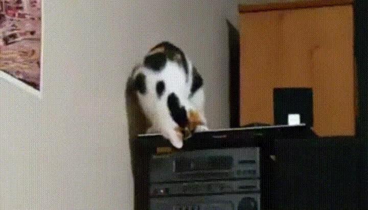 Enlace a Otro gato alucinando con la bandeja del lector de DvD's