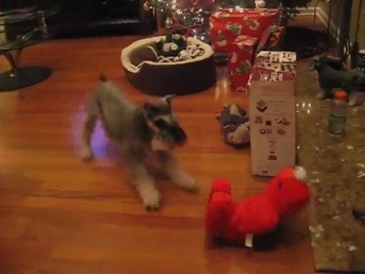 Enlace a Perro asustado y emocionado por conocer a Elmo