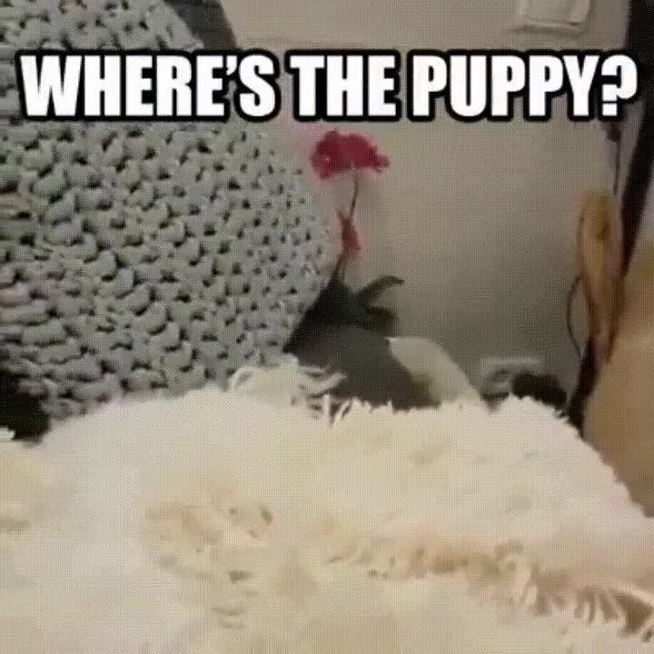 Enlace a ¿Eres capaz de ver dónde está el cachorro?
